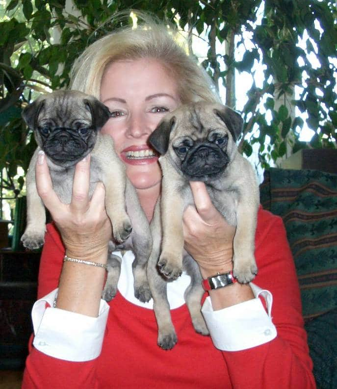 pet sitter with pugs, dog walker, carlsbad ca