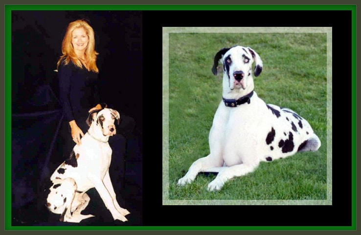 carrie seger pet sitter carlsbad ca with great dane