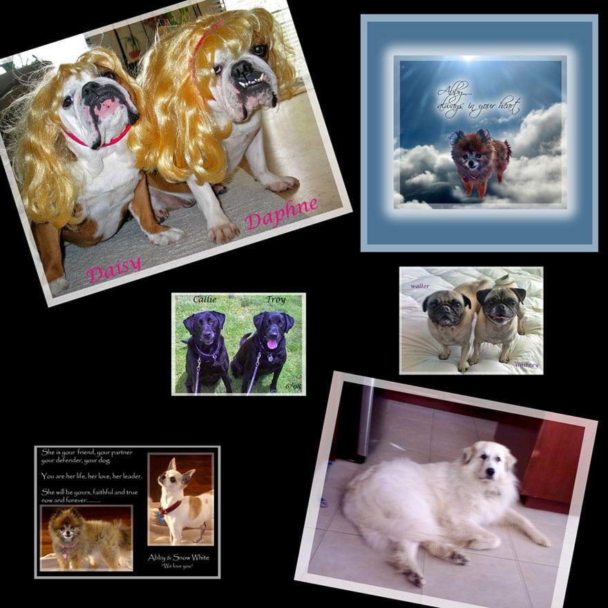 dog walkers Carlsbad CA love bulldogs, labradors.